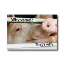 Why vegan? Thats why. (Pig) - Sticker (10x)