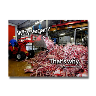 Why vegan? Thats why. (Knochen) - Sticker (10x)