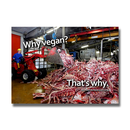 Why vegan? Thats why. (Bones) - Sticker (10x)