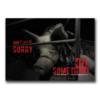 Dont just be sorry (pigs) - Stickers (10x)
